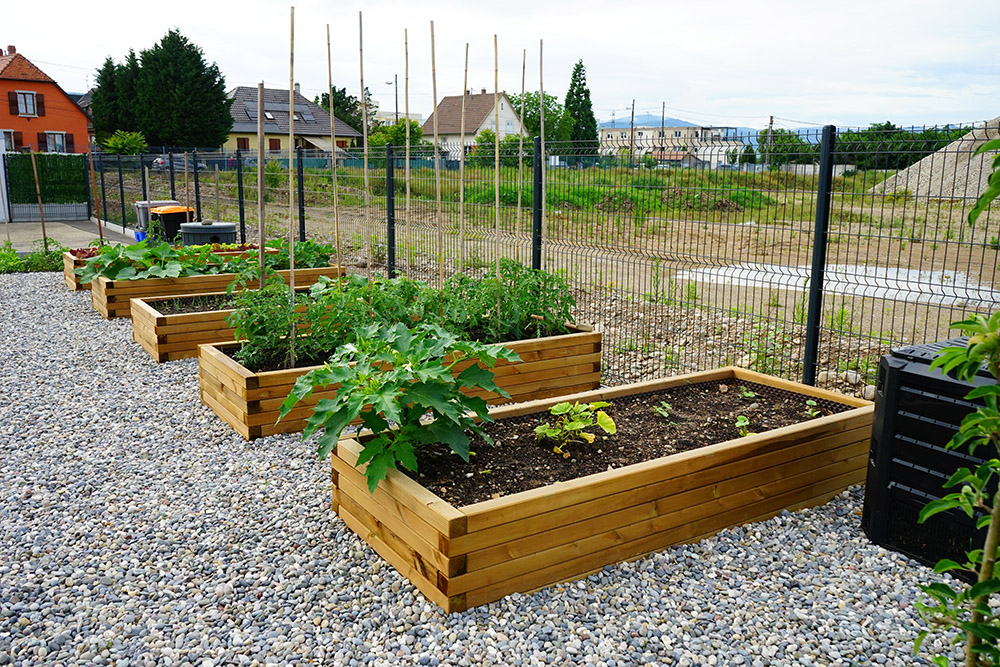 Le potager fin du printemps - Eurhode business services