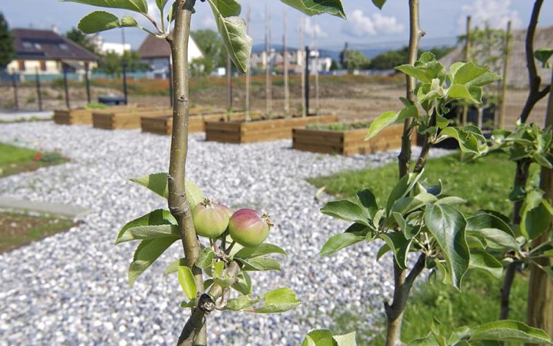 Jardin fruitier et potager d'Eurhode business services